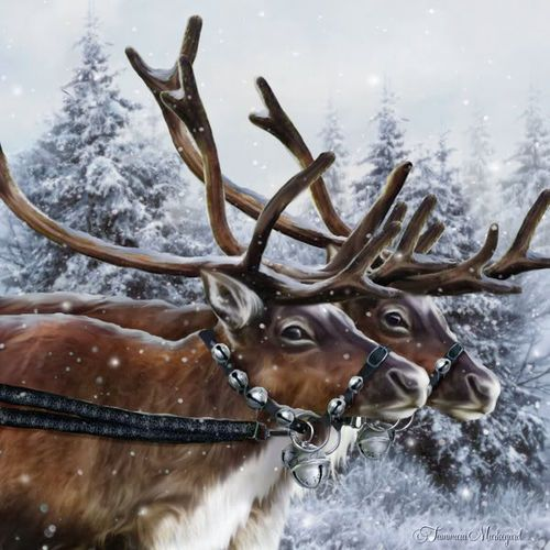 Just waiting for Rudolph and Santa.  Pinned by www.mygrowingtraditions.cm