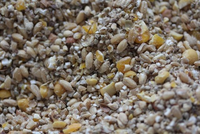 Bek's Backyard: How to make your own homemade duck feed...