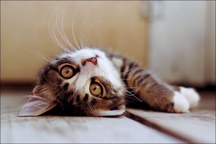 : Funny Kitty, Kitty Cat, Cute Cat, Baby Kittens, Lazy Cat, Crazy Cat, Big Eye, Cat Facts, Crazy Eye