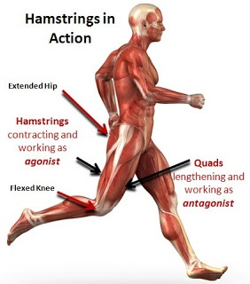 Hamstring Injury - Is It a Strain or Tear? Six Things That May Cause a Hamstring Injury