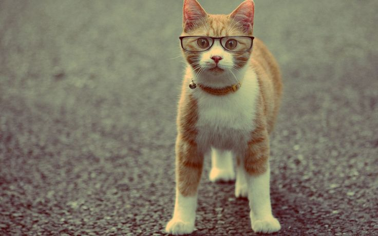 Funny Cat With Captions Wallpaper Full HD #471 • Funny at ngepLuk.com