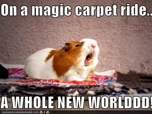 Hahaha!Point Of View, Funny Animal Pictures, Funny Pictures, Hamsters, Magic Carpets, So Funny, Disney, Aladdin, Guinea Pigs