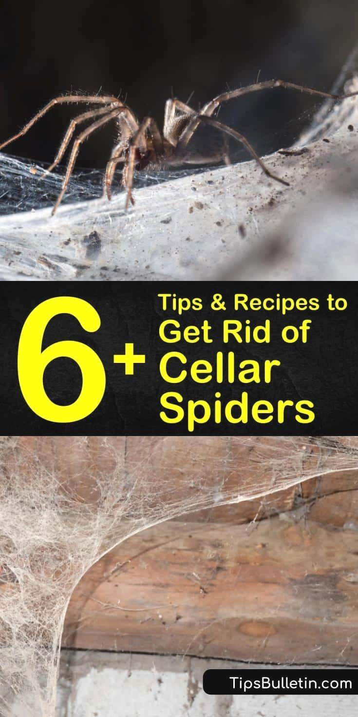 056abf50b9e0d1ad793da8acc5b8313d - How To Get Rid Of Spiders From Your Car