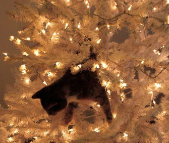 How to keep your cat out of your Christmas tree!