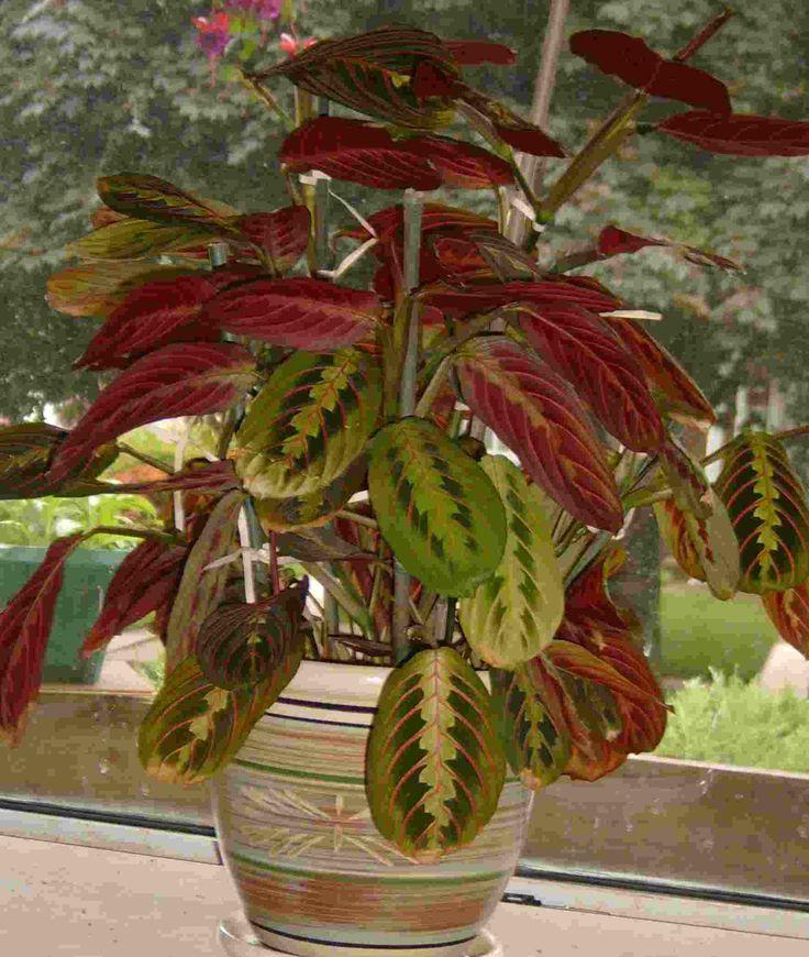51 Best Eco Friendly House Plants Air Purifiers Images
