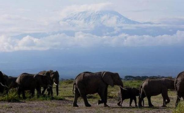 Amboseli National Park Safari in Kenya! I can bet all the movies you see about elephants are done here! Why watch on TV watch it live at Amboseli National Park in Kenya - Africa