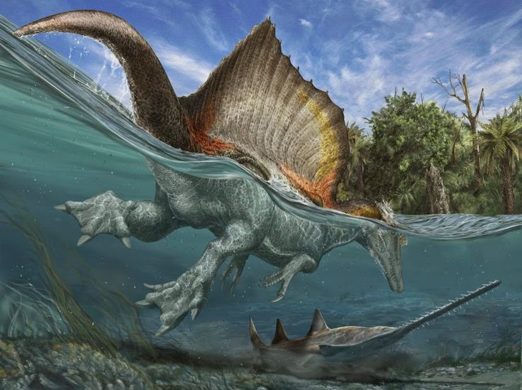 Species New to Science: [Paleontology • 2014] Semiaquatic Adaptations in a Giant Predatory Dinosaur, Spinosaurus aegyptiacus