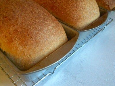 Whole Wheat breadBreads Recipe, Homemade Wheat Breads, Meat Loaf, Loaf Breads, Homemade Breads, Whole Wheat Recipe, Homemade Wheat Rolls, Homemade Wheat Buns, Homemade Whole Wheat Breads