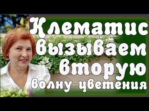 нина петруша - YouTube