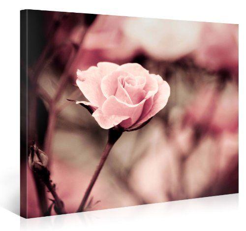 Pink Rose - Premium Kunstdruck Wand-Bild - 100x75cm XXL Leinwand-Druck in deutscher Marken-Qualität - Leinwand-Bilder auf Holz-Keilrahmen als moderne Wohnzimmer Deko