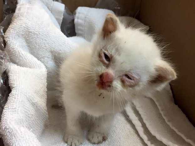 Er rettet dieses Kätzchen. Als es endlich die Augen öffnet, kann er nicht glauben, was er da sieht! | LikeMag | We Like You