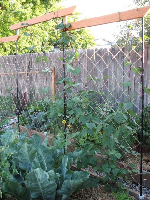 Pole Bean Trellis Ideas Part - 50: Lots Of Pole Bean Trellis Ideas