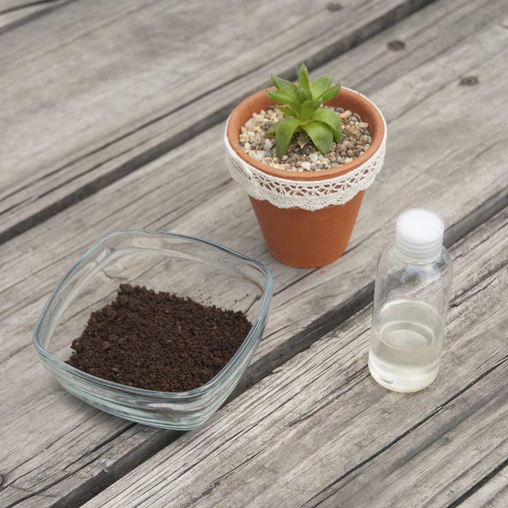 Tutorial: Aceite exfoliante de café.  Ideal para combatir la celulitis.