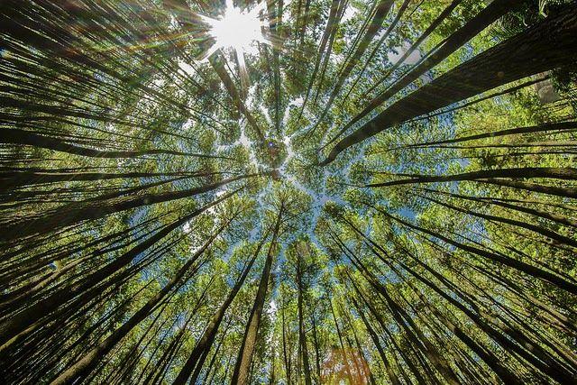Paling Hits 30 Wallpaper Pemandangan Hutan Pinus Pemandangan Alam Kita Wallpaper Pemandangan Hutan Pinus Download Keunikan Di Hut Di 2020 Pemandangan Pinus Gambar