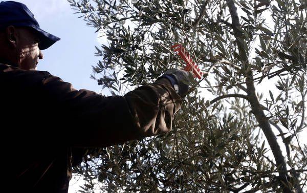 http://www.ansa.it/terraegusto/notizie/rubriche/fiereeventi/2013/12/04/Torna-Qoco-filo-olio-piatto_9725904.html