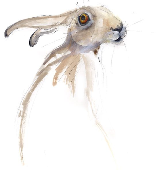 Hare in ink and watercolour, by Becky Brown.