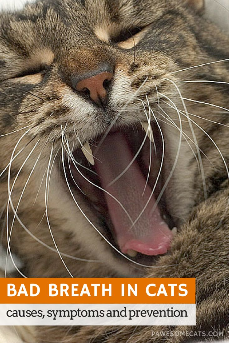 336 best images about Animal Dentistry - FYI on Pinterest Fyi Cat