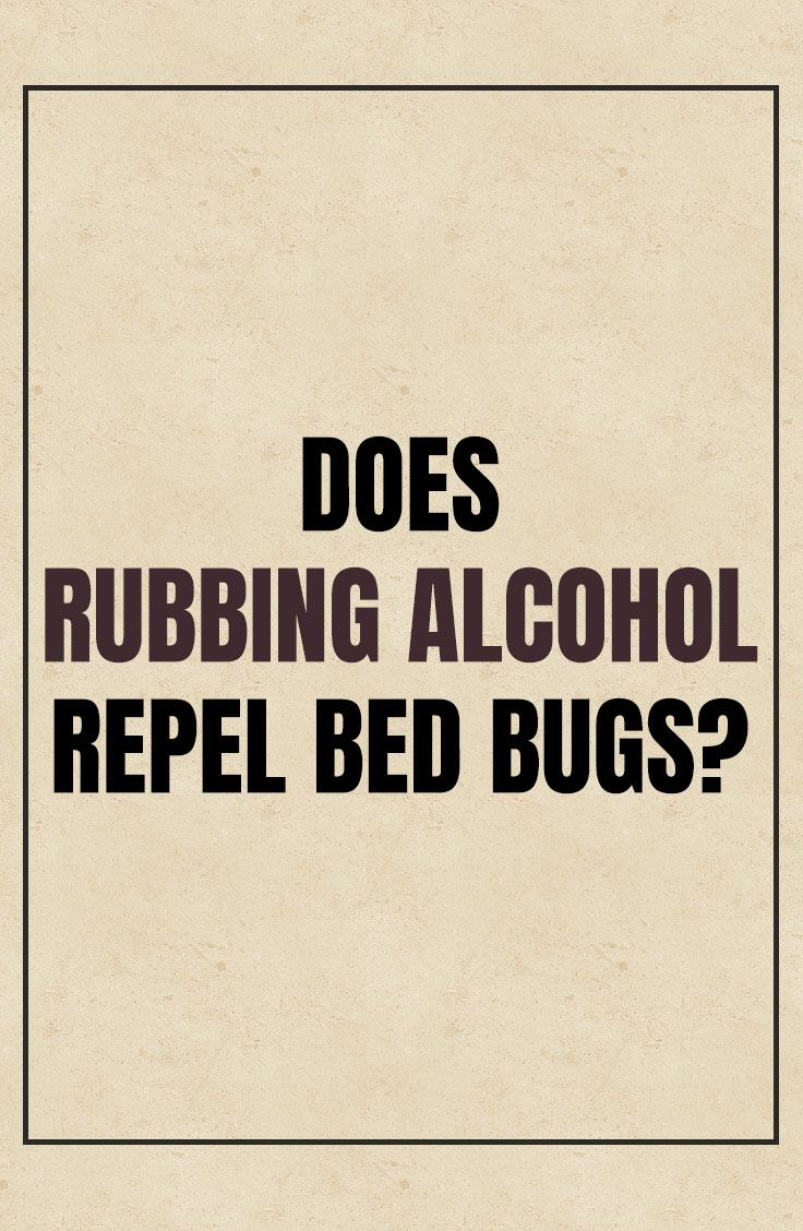 Does Rubbing Alcohol Repel Bed Bugs? Bed bugs, Rubbing