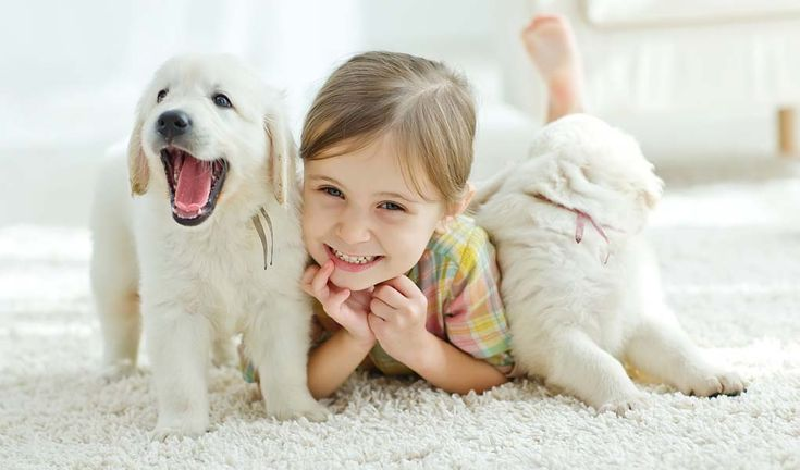 Kids and dogs are drawn to each other. Many dogs love children and most children love dogs. It makes sense. They're both playful, love to cuddle and they both need a lot of attention.