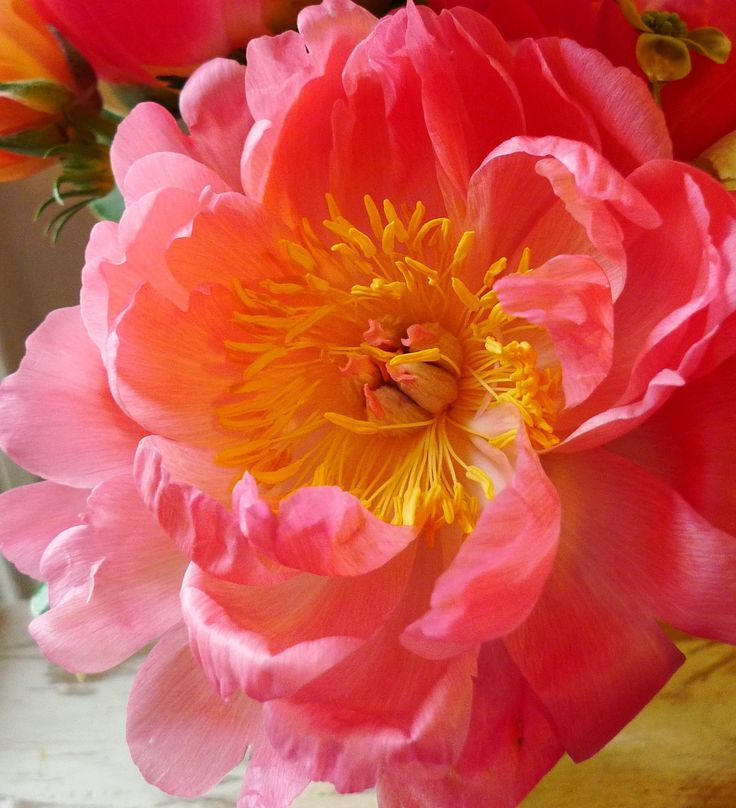 Google Image Result for http://www.hbloom.com/blog/wp-content/uploads/2012/07/Coral_Charm_Peonies_2.jpg