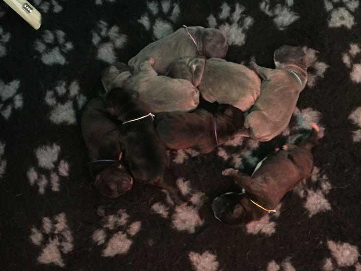 Bella s pups