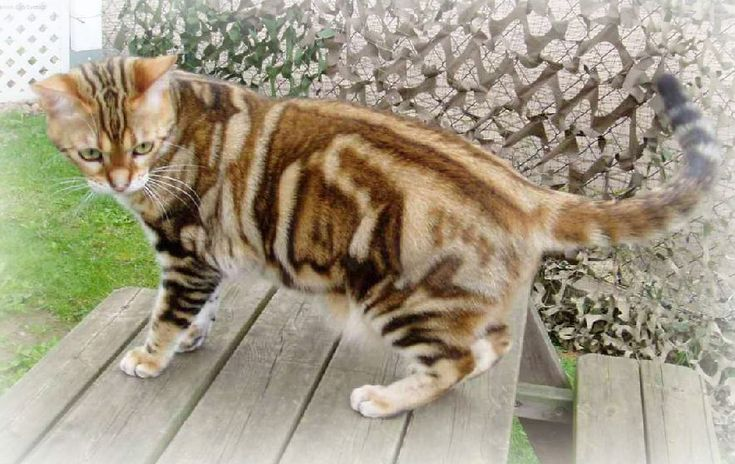 All Types of Cats Breeds - #cattbreeds -Tops Cat Breeds at Catsincare.com!