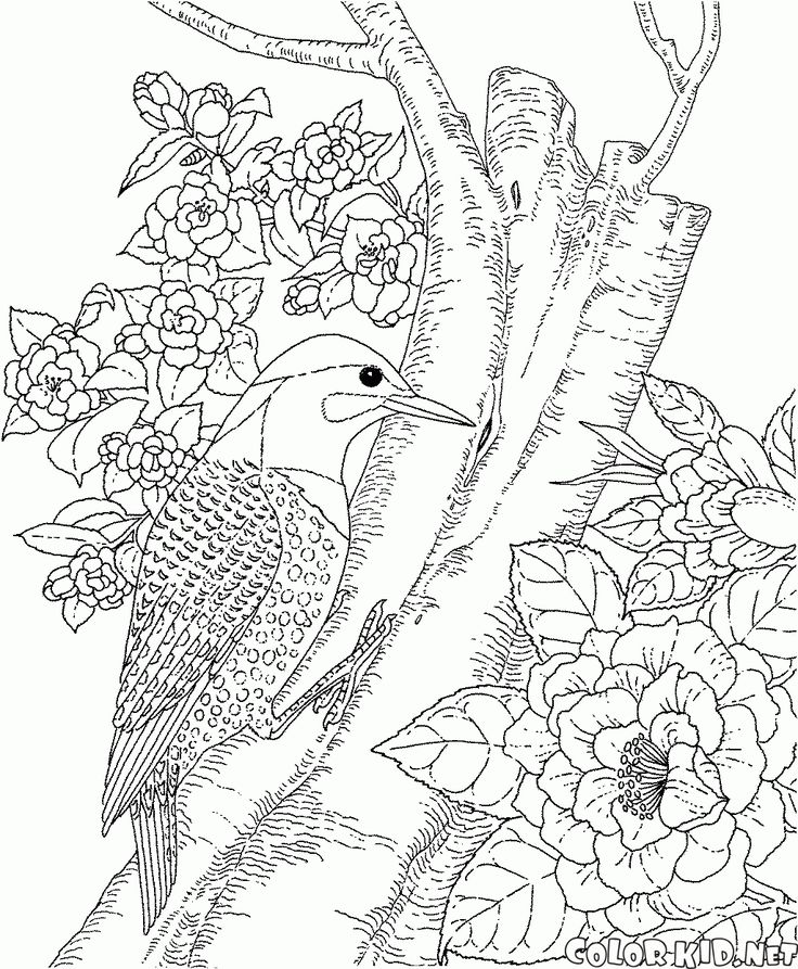 Pigeon Coloring Page To Print Out: Best 25+ Bird Coloring Pages Ideas That You Will Like On