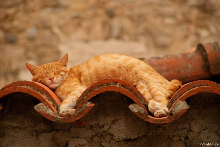 Flexible Ginger Cat Sleeping on a Bendy Wall - Can bend to any shape