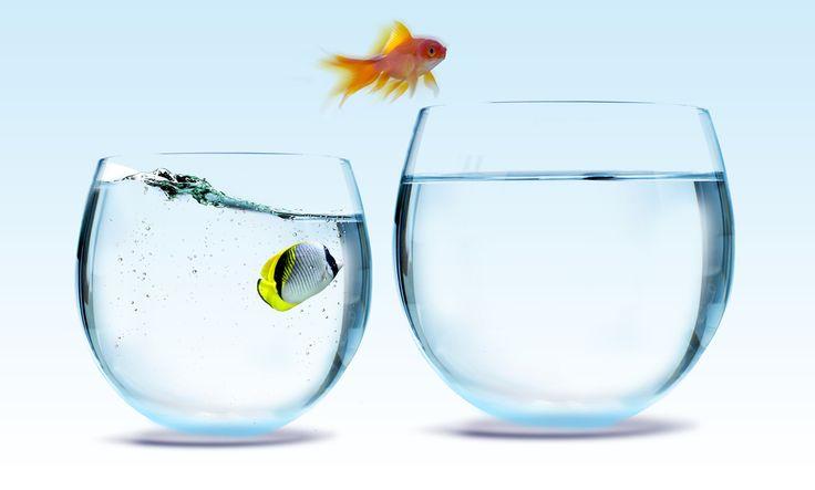 Vems ansvar är din kompetensutveckling? http://gottarbetsliv.se/vems-ansvar-ar-din-kompetensutveckling/