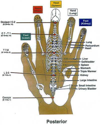 Korean hand reflexology chart (posterior) - Charte de réflexologie coréenne de la main (vue postérieure)