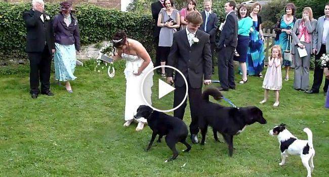 Cão Dá Os Parabéns a Casal Recém Casado… De Forma Pouco Agradável!!