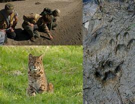 Wildlife Tracking Apprenticeship at Alderleaf: http://www.wildernesscollege.com/wildlife-tracking-apprenticeship.html
