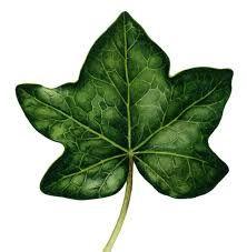 Resultado de imagem para botanical leaf                                                                                                                                                      More