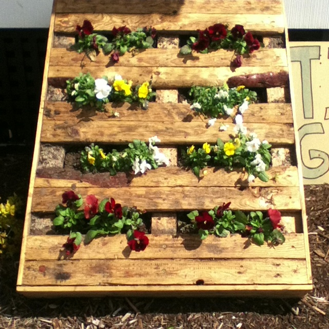 Recycled pallet vertical garden home sweet home for How to make a recycled pallet vertical garden