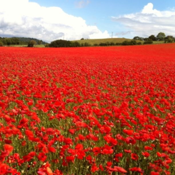 Fewcott, England — by Tony Gee. Poppies