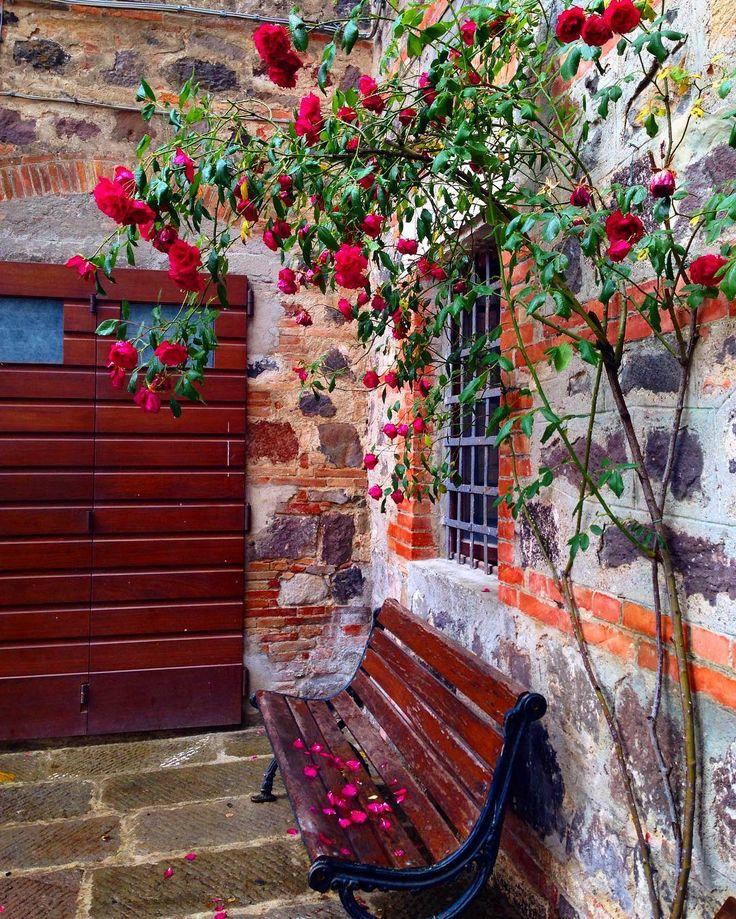 👋🏻👋🏻👋🏻Good morning from rainy Tuscany! У меня утром и вечером под окном такое хоровое пение птиц! Причем некоторые трели я слышу впервые😳 Хорошего дня! #igersiena #radicofani #italy #tuscany #tuscanygram #rose