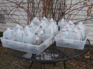 Winter-Sowing 101: Winter Seeds, Minis Greenhouses, Milk Jug, Wintersow, Seeds Outdoor, Winter Sow, Seeds Start, Seeds Sow, Sow Seeds