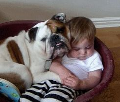 Bulldogs are kind-hearted protectors.