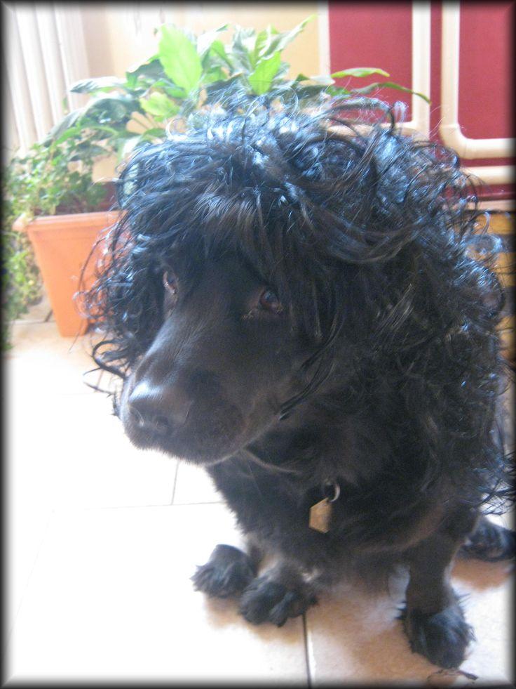 dog with hair