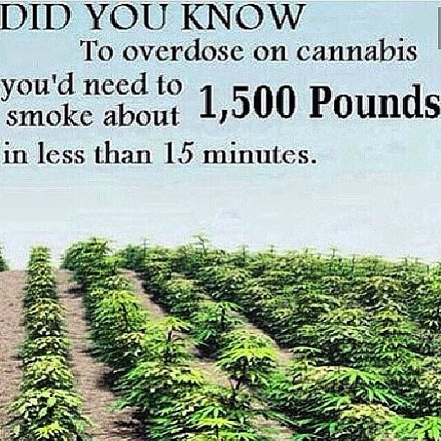 drugs leaves quotes marijuana-#main