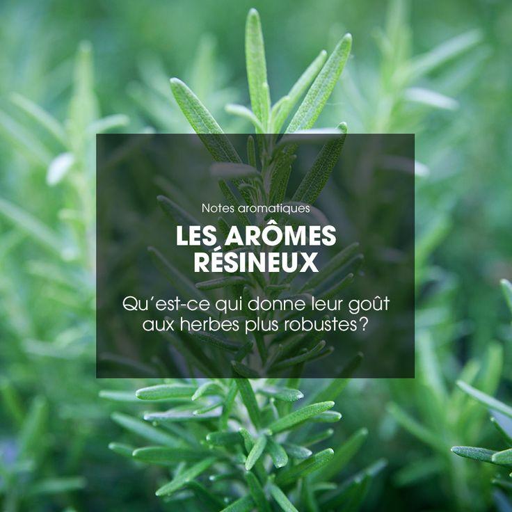 Qu'est-ce qui donne leur goût aux herbes plus robustes?