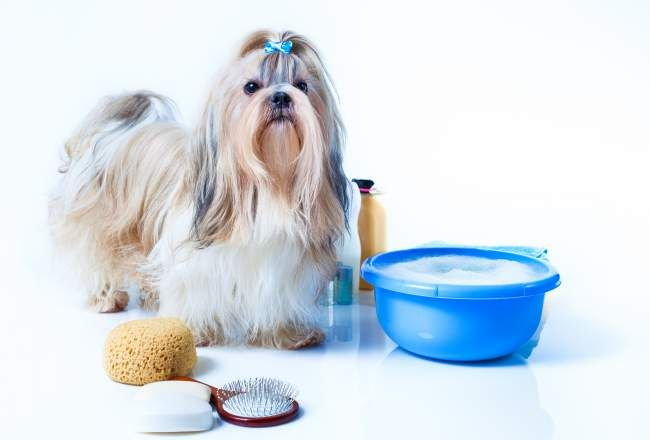 Best Shampoo For Shih Tzu 2019 Buyer S Guide Dog Grooming