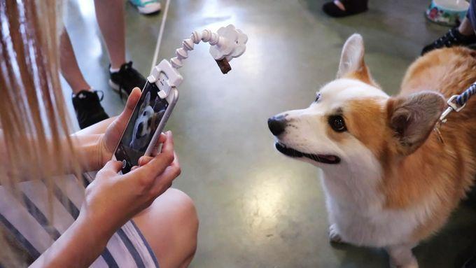핸드폰으로 완벽한 애완동물 사진을 찍는 방법 :: 싸굴다방 DJ
