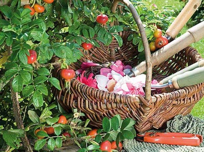 15 gestes écolos pour jardiner autrement Plantation, observation, prévention, rotation des cultures... les gestes durables pour un jardin naturel et responsable.