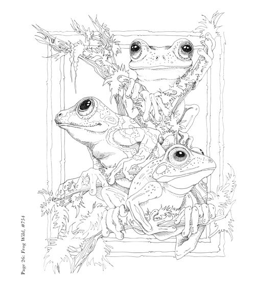 459 best Amphibians \ Sea Life Coloring Pages images on Pinterest - fresh coloring pages tree frog