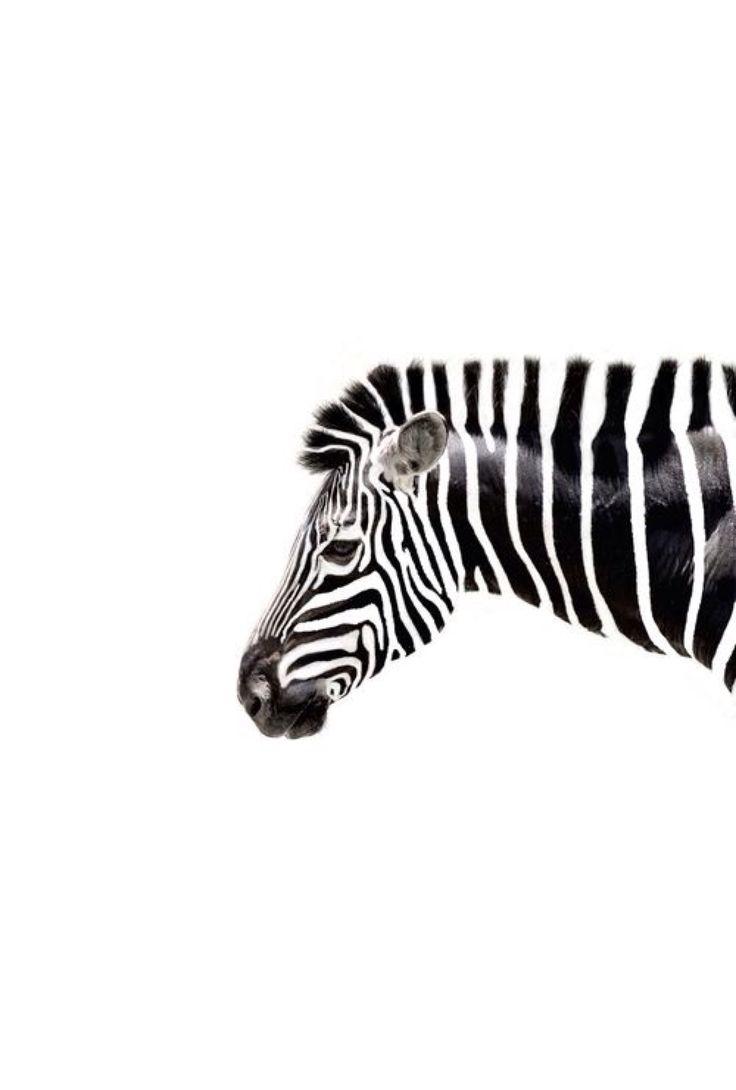"""Über 1.000 ideen zu """"tumblr bilder schwarz weiß auf pinterest"""