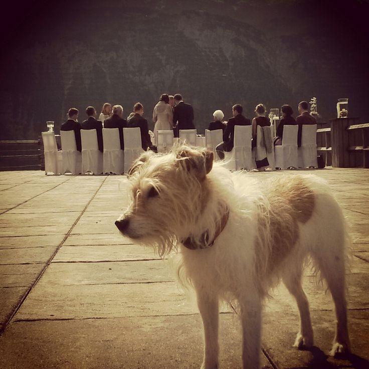 Meggie wacht persönlich über unsere Hochzeitsfeiern im Alten Goldenen Berg #Lech #Arlberg #Hochzeit #loveIsIntheAir #goldenerberg    Der Alte Goldene Berg ist die ideale Location für Feiern aller Art - Geburtstage, Hochzeitsfeiern, Firmenevents, uvm