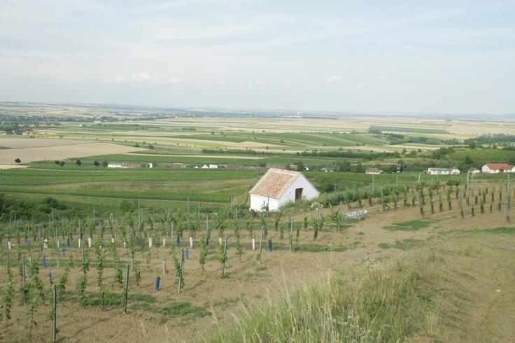 Weinviertel ... Österreichs größter Weingarten