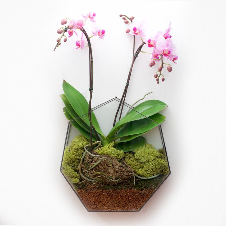 Heptagon wall terrarium. Plant not included.