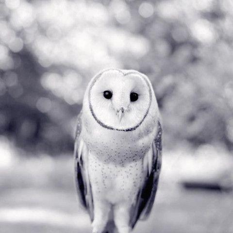 Barn Owl - fine art photography print by Allison Trentelman   rockytopstudio.com